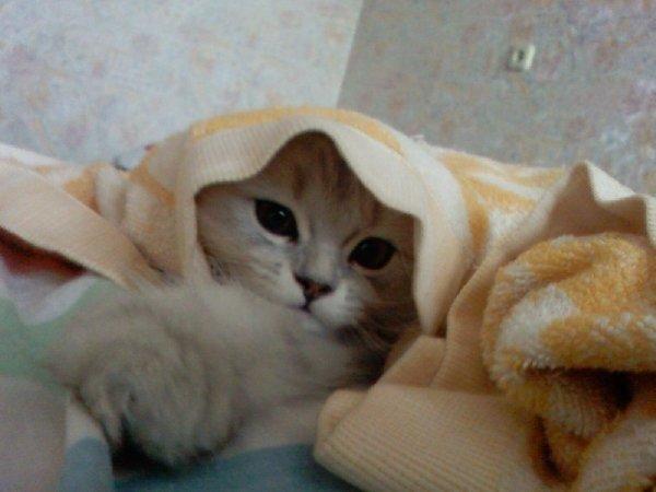 схема домика для кошки.  Эти элитные домики для кошек будут долго служить Вашему питомцу.
