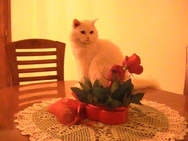 Библос с розами