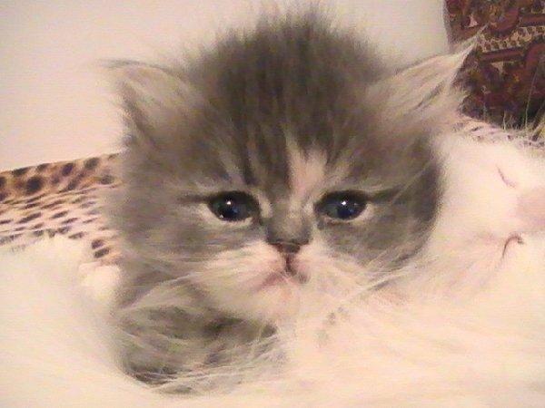 Малышка Клео