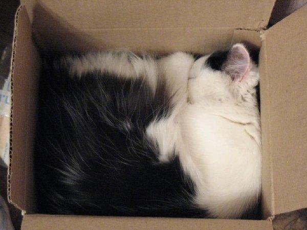 Кошка по имени Рыся. Так она любит спать.