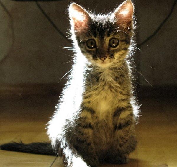мой бедный котеночек - его жизнь была такой короткой, но  много любви  он оставил в моем сердце...