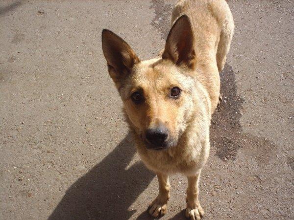 Собачка, которую хозяин- инструктор привез на автодром и бросил. Теперь она там живет и бегает за его машиной, когда он там работает.