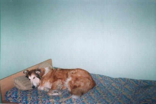 Моя Аделя любила спать на кровати.