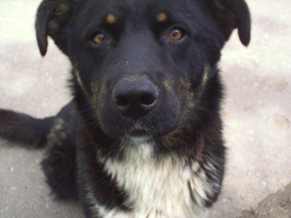 Этот добрый пес жил на автодроме и погиб от рук службы по очистке города. Верю, твоя душенька в раю, я тебя буду всегда любить и незабуду никогда.