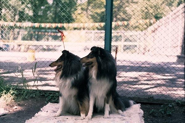 выставка собак в Ташкенте 2005 год.