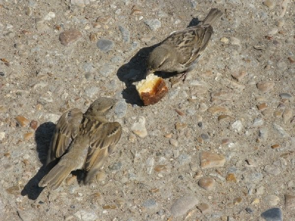 мама кормит птенчика крошками