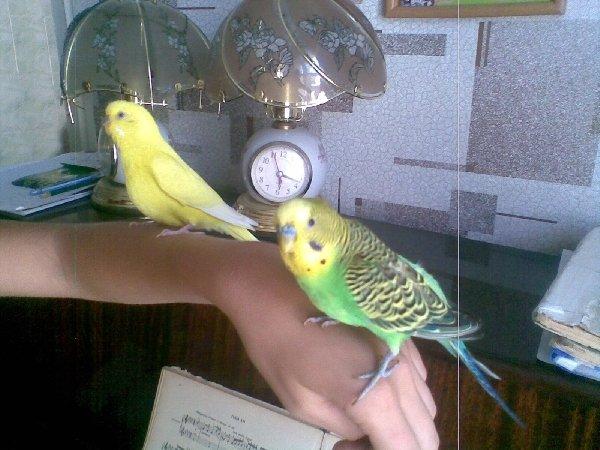 Мои любимые птички!