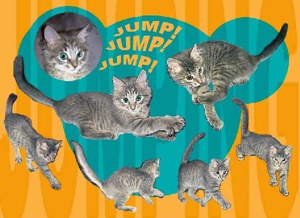 """���� \\\""""jump\\\"""""""