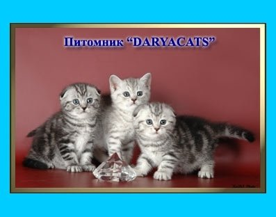 �������� Daryacats ���.WCF 070015.77 ���������� ���������� �������� � ����������� ��������� ����� �� ������ �������������� �����.  ������:  �������,�������,  ����������,������,  ����������� ����� (������),  ������ ������ �� �������,  ����������� �������� � ����������� �������. ������ �������� �� �����.  �. 8- (495)-437-48-55  �.���. 8-905-580-23-97  �.���. 8-926-345-91-37  ���� ����� �� �����:  http://www.daryacats.narod.ru