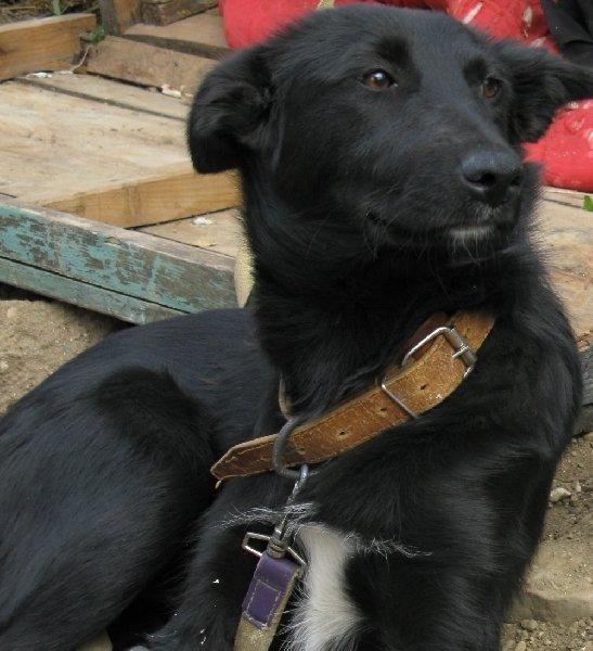 молодой пес Абат ищет нового хозяина в Уфе. тел 89177808005.