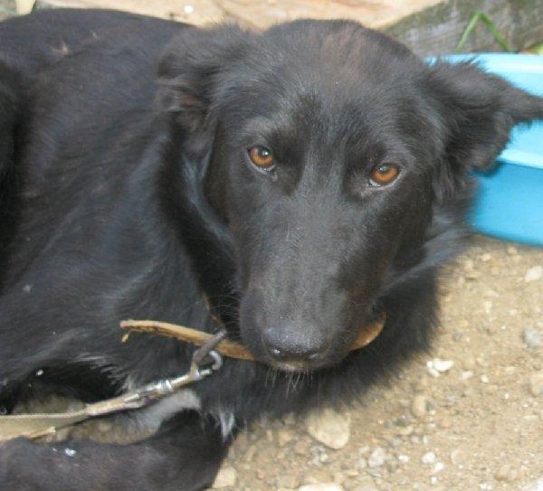 молодой, умный, доброжелательный пес Абат со сломанной лапой - гипс снимем через 14 дней. помогите найти ему новый дом в Уфе.