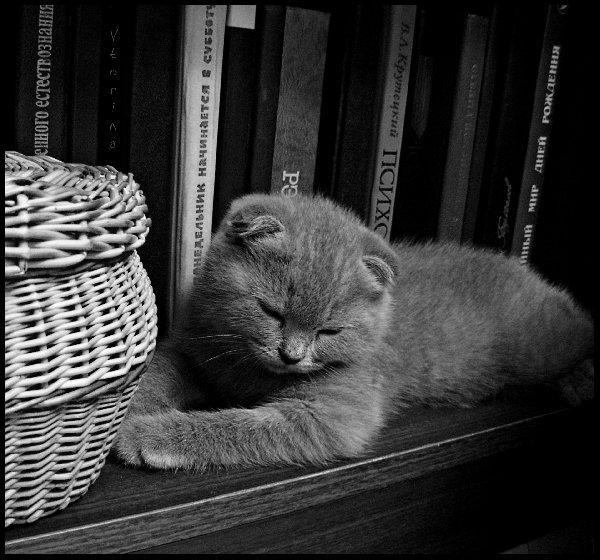почитали .... можно и поспать