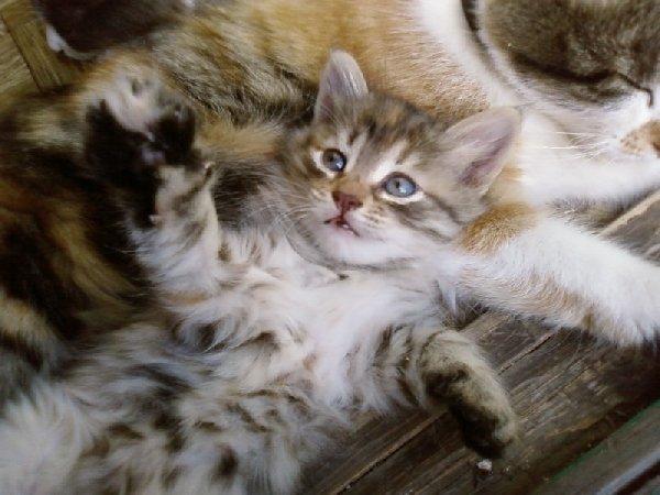 Хорошо котёнку дома рядом с мамой!