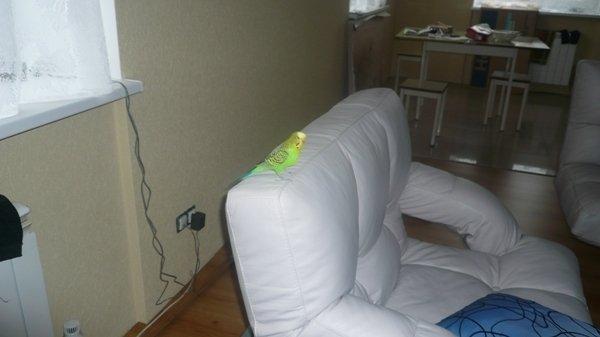 Новый хозяин кресла