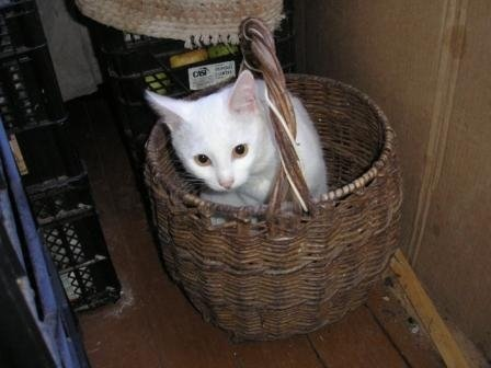 любимое место кота Васи