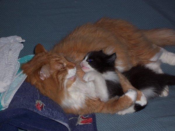 Киссуня (рыжий) и Джо (маленький):)
