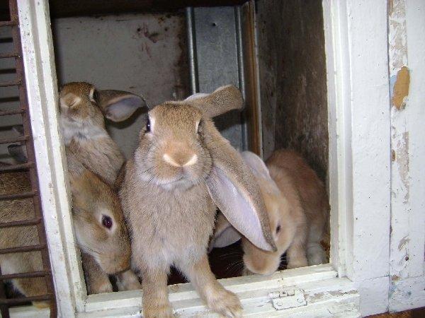 Братья кролики ))