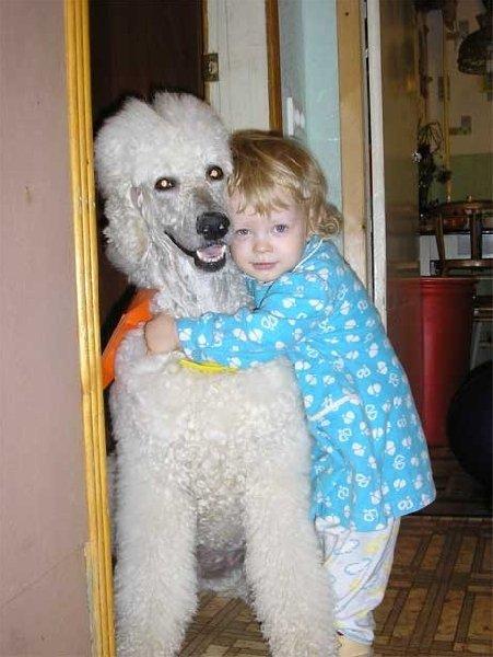 Дочка Катюша 2,5 лет со своей любимой собакой большим пуделем Нюсей 9 лет