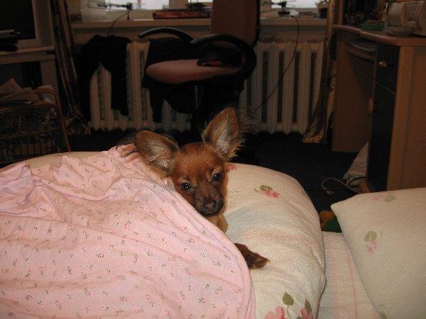 Под тёплым одеялом, морозным днём...