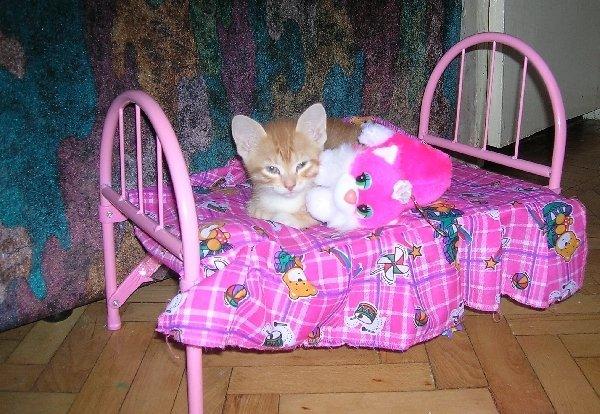 Рыжик наигрался и решил отдохнуть!!!