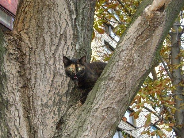 Кошечка на дереве