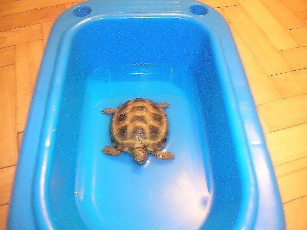 Принимает ванну!