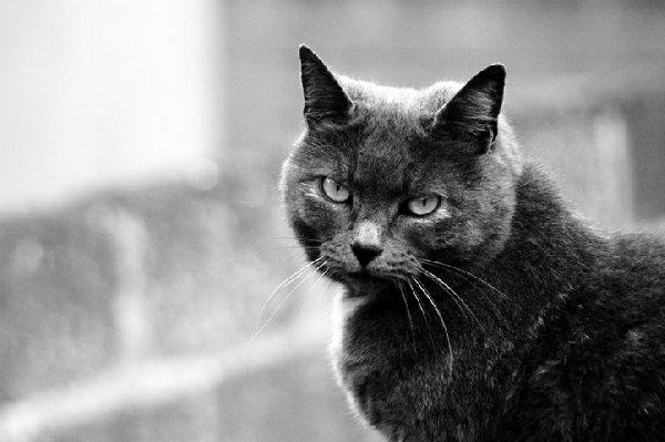 Этого милого пушистого зверя, обладающего завораживающими взгляд глазами, зовут Smoky,что означает Дымок. Он стал мне настоящим другом во время моей поездки в Англию.