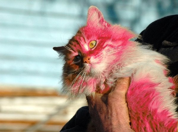 Любопытная фотография интересного кота.