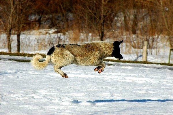Кто сказал, что собаки не умеют летать?