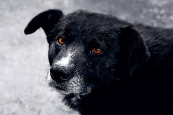 ПРОСТОЙ Пёс, но непростая жизнь