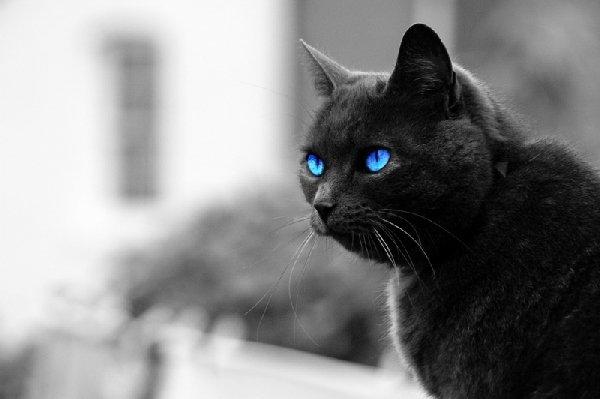 Голубоглазый красавец