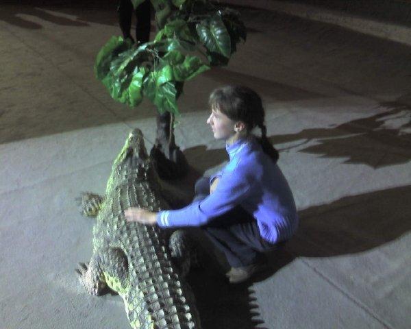 Я и нильский крокодил