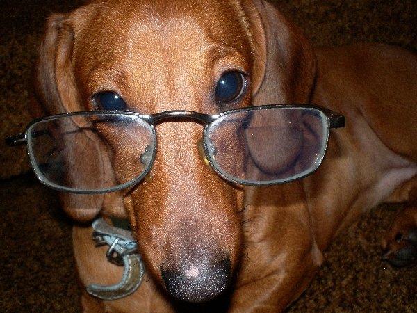очень умная собачка!?