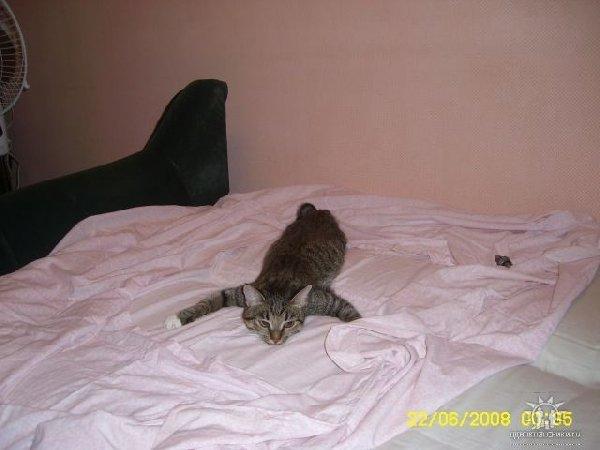 Наша Пеппи отдыхает после трудного дня