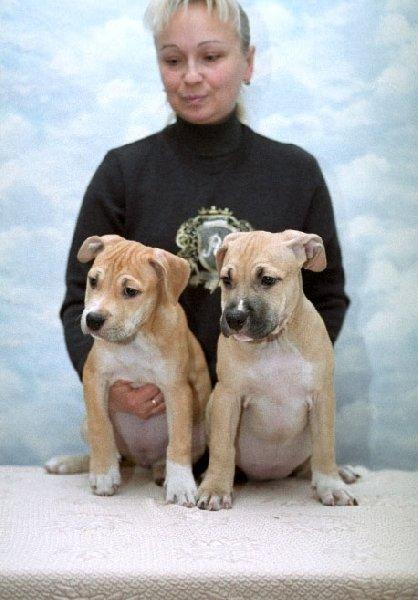 Это я и малыши от вязки Марлен Брао Игл и Сара .