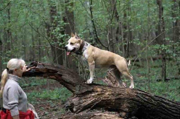 Лесные прогулки. Я и Гоша .