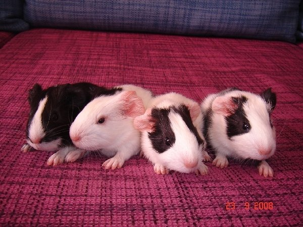 Три сыночка и лапочка-дочка
