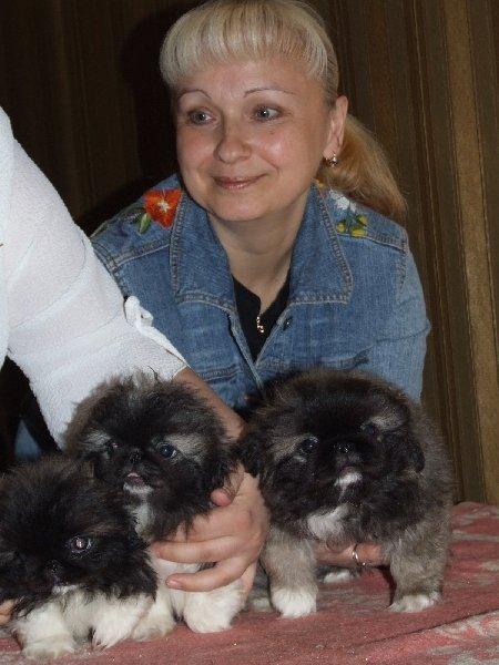 Я и пекинесики Кати Патрикеевой .
