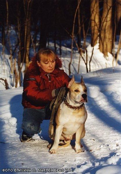 Маленький Гоша. На этом фото Гоша еще щенок .