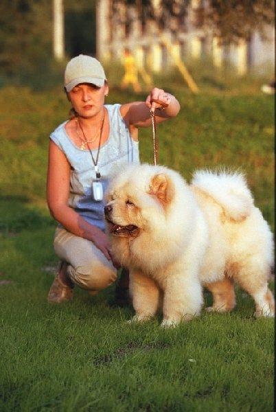 Марина Задорожная и чау чау Халиф . Все собаки Марины друзья моего амстаффа Гоши .
