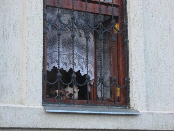 Две девицы под окном...