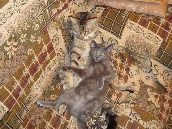 2 моих кота=)
