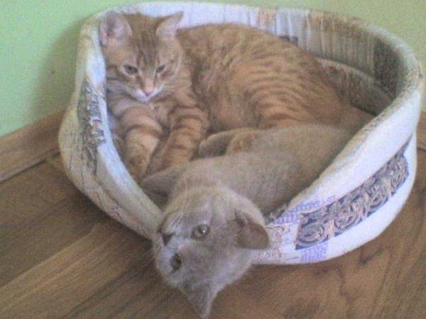 """мои кот и кошка в их любилой \\\""""люличке\\\""""."""