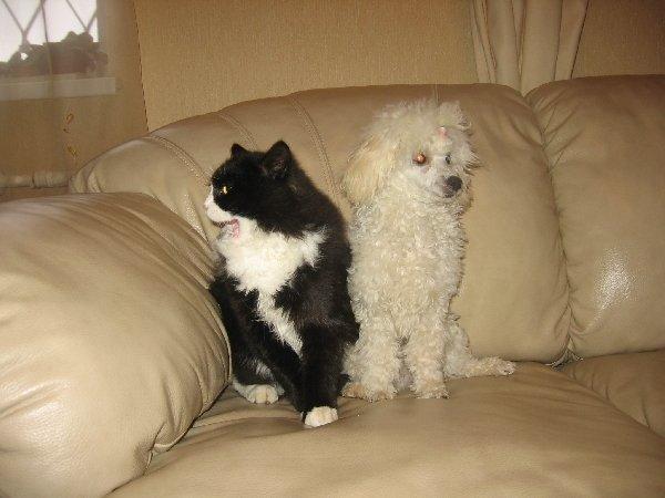 """А это-\""""котёнок из чашки со своим новым другом"""
