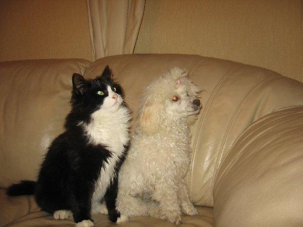 Они одного роста,но кот весит в 3 раза больше собаки