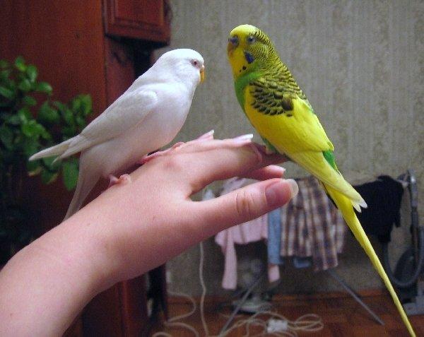 Кеша и Анечка