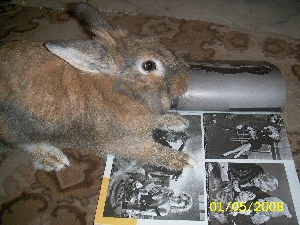 Это мой Семик.Я читала журнал, Семик подбежал ко мне, в это время я решила сфотографировать его, читающего журнал!!!:))