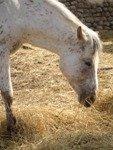 Умный Ганс или феномен эльберфельдских лошадей