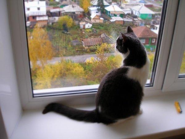 Кот Кузя: на птиц - свысока!
