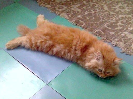 Любимому котику очень жарко!